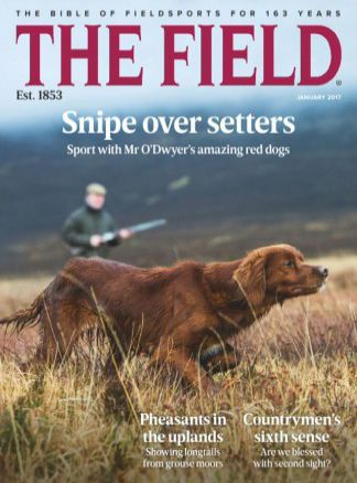 The Field 1/2017