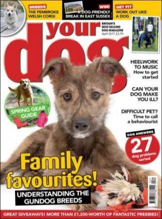 Your Dog 1/2017