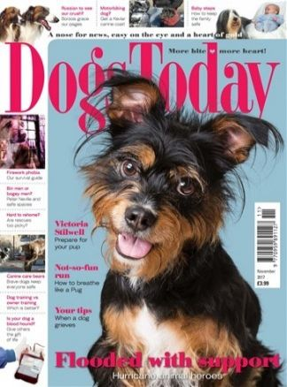 Dogs Today 4/2017