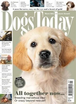 Dogs Today 1/2021