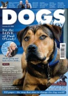 Dogs Today 1/2014