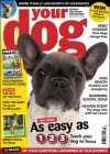 Your Dog 1/2016