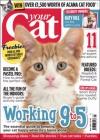 Your Cat 1/2016