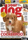Your Dog 4/2017