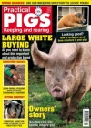 Practical Pigs 1/2018