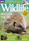 BBC Wildlife 1/2019